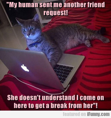 My Human Sent Me Another Friend Request