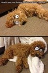 Turn Your Sleeping Pet Into A Cartoon Character
