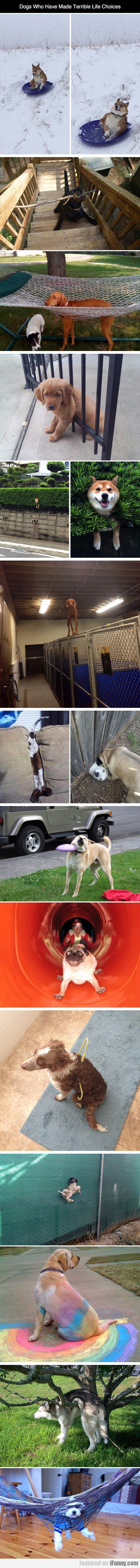 Dogs Who Have Made Terrible Life Choices
