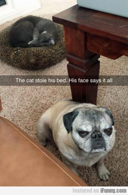 The Cat Stole His Bed