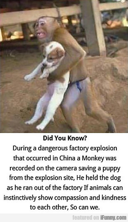During A Dangerous Factory Explosion...