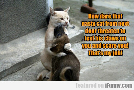 How Dare That Nasty Cat From Next Door...