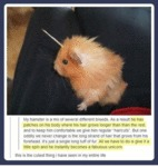 My Hamster Is A Mix Of Several Different Breeds...