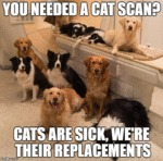 You Needed A Cat Scan?