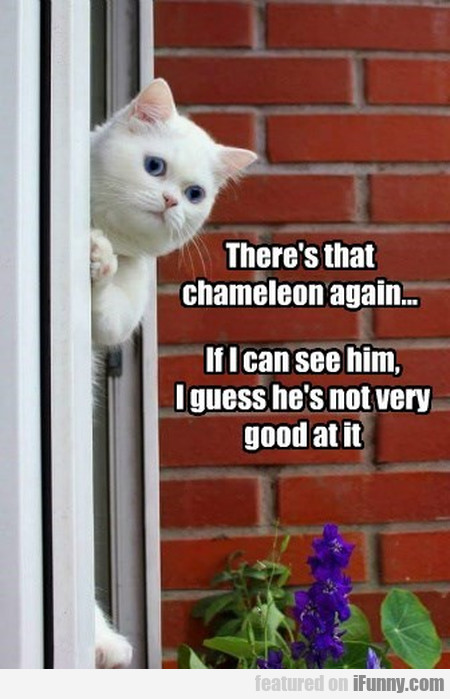 There's That Chameleon Again...