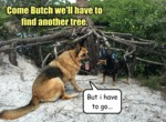 Come Butch We'll Have To Find Another Tree