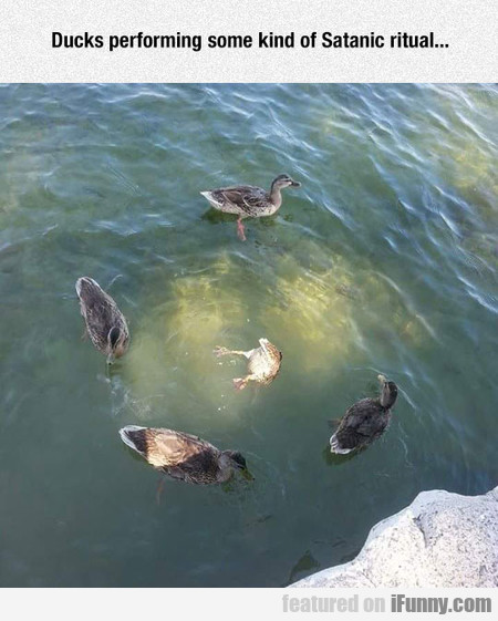 Ducks Performing Some Kind Of Satanic Ritual
