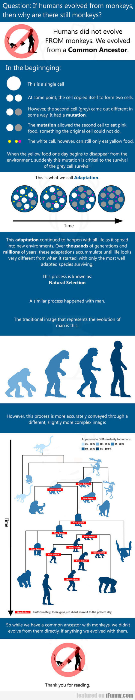 If Humans Evolved From Monkeys, Then Why...