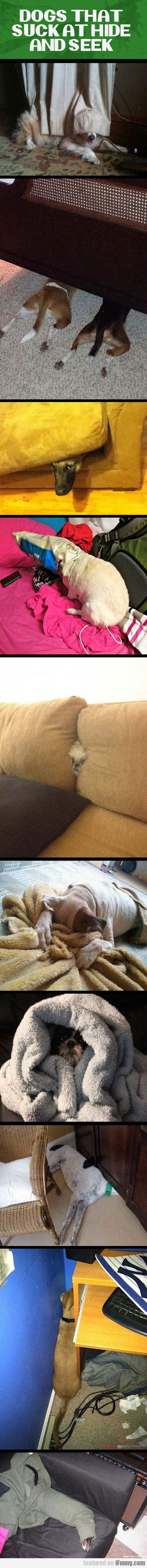 Dogs That Suck At Hide And Seek