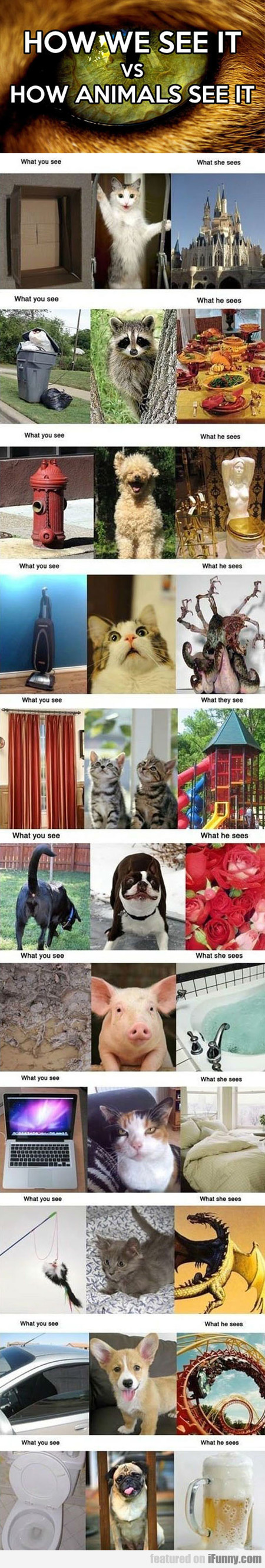 how animals see it