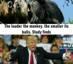 The Louder The Monkey...