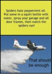 Spiders Hate Peppermint Oil...