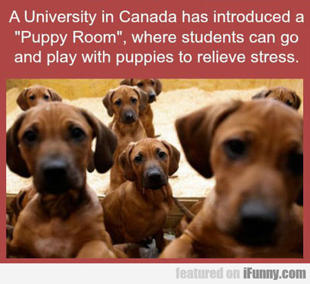 A University In Canada Has A Puppy Room