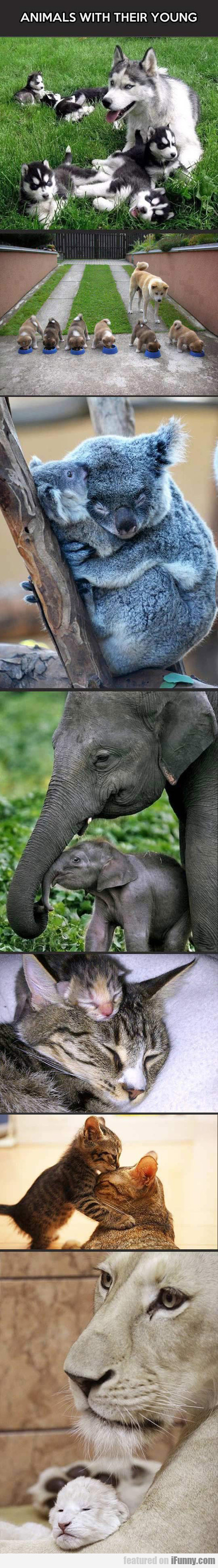 Animals With Their Young