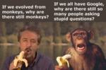 If We Evolved From Monkeys...