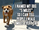 I Named My Dog 5 Miles