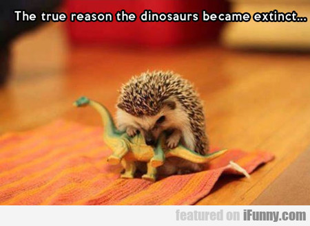 The True Reasons Dinosaurs Went Extinct...