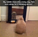 My Rabbit Does This All The Time...
