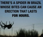 There's A Spider In Brazil...