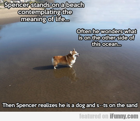 Spencer Stands On A Beach
