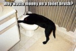 Why Waste Money On A Toilet Brush?