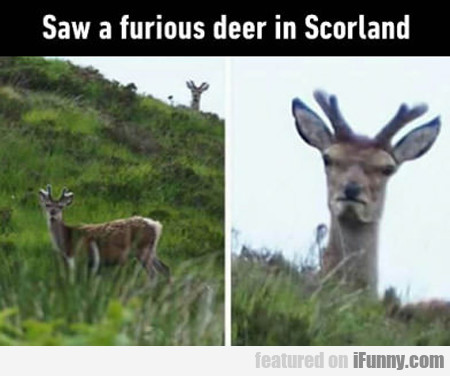 Saw A Furious Deer In Scotland...