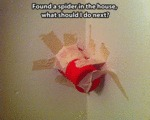 Caught A Spider...