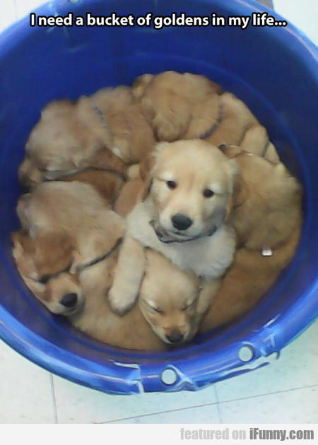 I Need A Bucket Of Goldens In My Life...