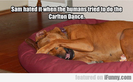 Sam hated it when the humans tried to do...