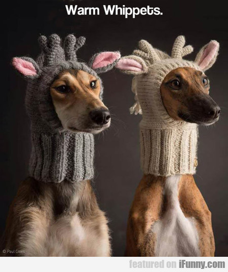 Warm Whippets