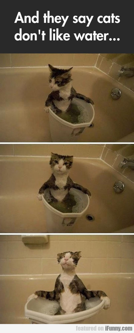 And They Say Cats Don't Like Water