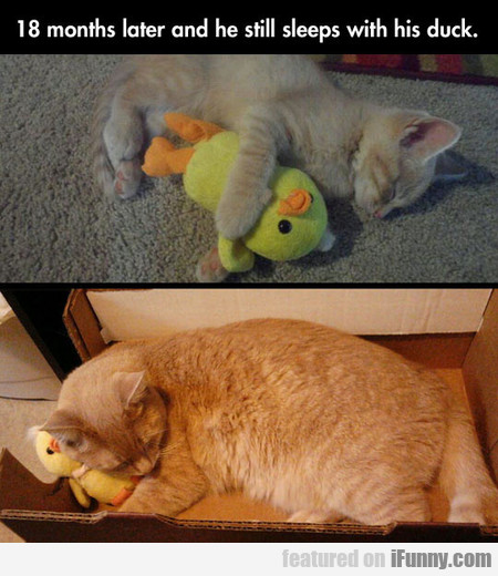 18 Months Later And He Still Sleeps With His Duck