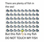 There Are Plenty Of Fish In The Seas...