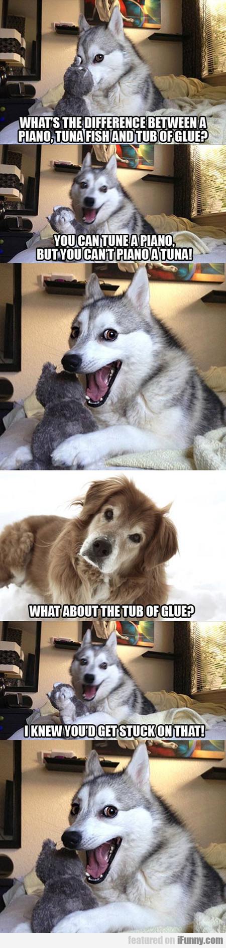 Huskies Know The Best Jokes