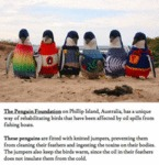 The Penguin Foundation...