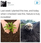 Last Week I Planted This Tree