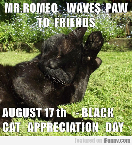 Romeo Waves Paw To Friends
