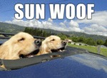 Happy Dogs In The Sun
