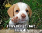 Paws Up If You Love Animals