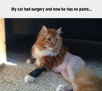 My Cat Had Surgery And Now He Has No Pants...