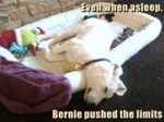 Even When Asleep, Bernie Pushed The Limits