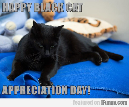 Happy Black Cat