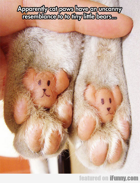 Apparently Cat Paws Looks Like Tiny Little Bears