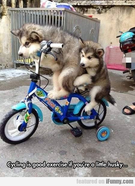 Cycling Is Good Exercise If You're A Little Husky