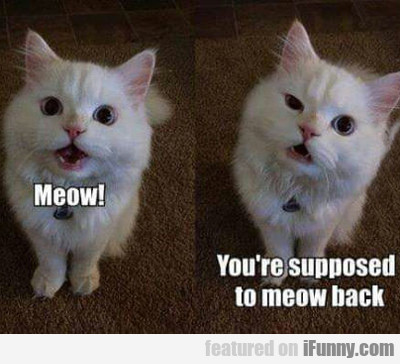 Meow, You're Supposed To Meow Back...