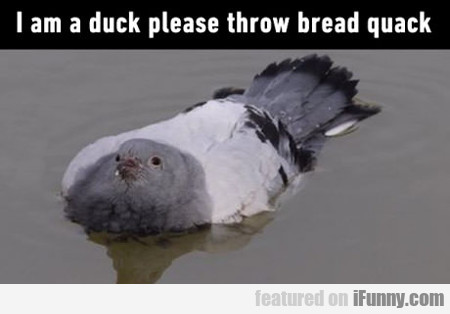 I Am A Duck, Please Throw Bread Quick...