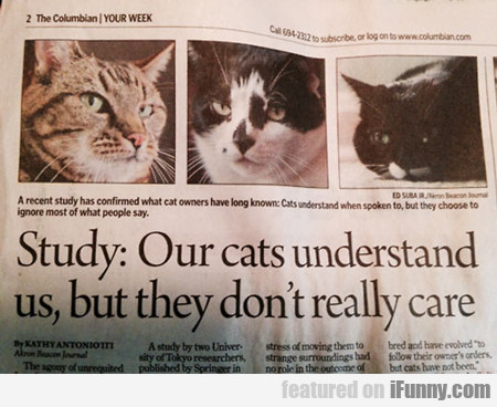 Out Cats Understand Us But…