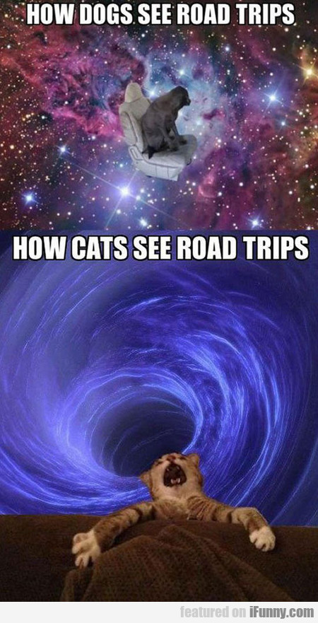 How Pets See Road Trips