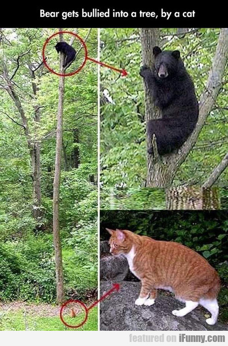 Bear Gets Bullied Into A Tree, By A Cat