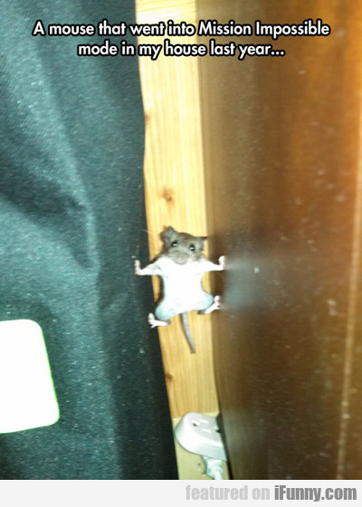 found a mouse...